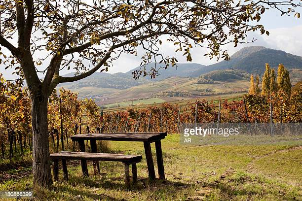 Landscape of the German Wine Route in autumn, Southern Palatinate, Pfalz, Rhineland-Palatinate, Germany, Europe