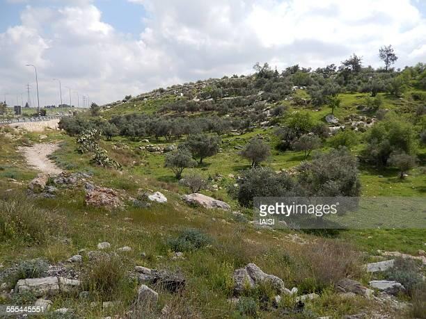 Landscape of the Jerusalem hills