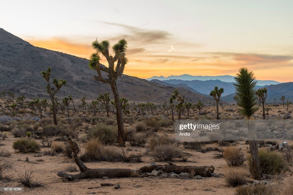 Landscape of the Joshua Tree National Park in California, Western