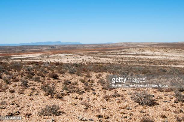 landscape of the knersvlakte region, being part of the succulent karoo and typically covered with patches of quartz gravel, western cape, namaqualand, south africa - ナマクワランド ストックフォトと画像