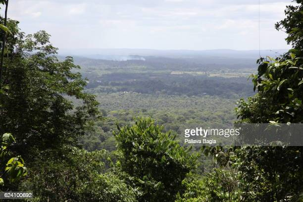 A landscape of the massive rain forest spread French Guiana is haven for plants and animals with ninety percent of the area under tropical...