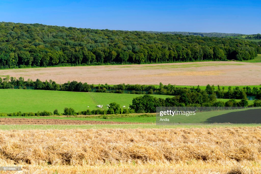 Landscape of the Meuse Valley in Villemontry (north-eastern France). Cultivated fields and forest.