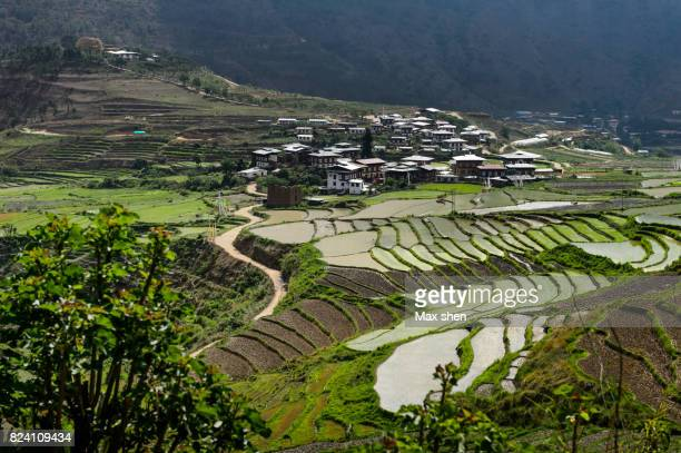 landscape of the mountain village surrounded by the terraced fields in bhutan - プナカ ストックフォトと画像