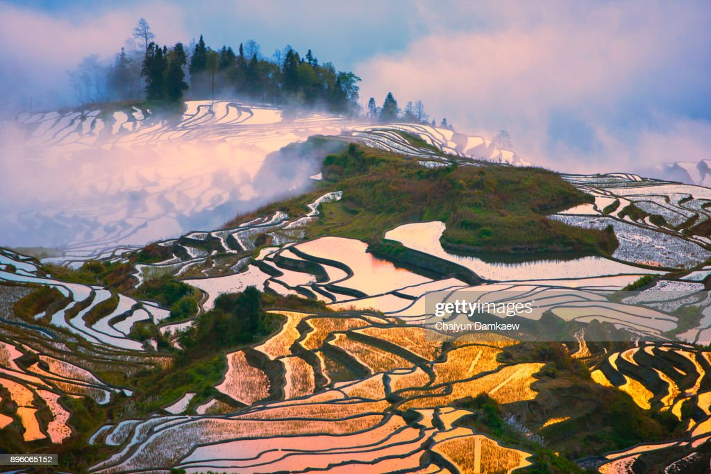 Landscape of The Yuanyang Rice Terraces : Stock-Foto