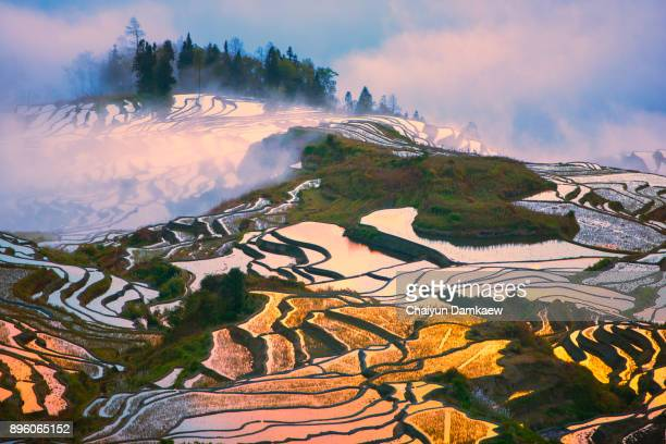 landscape of the yuanyang rice terraces - rice terrace stockfoto's en -beelden