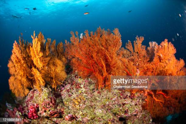 landscape of underwater coral reef and school of fish. - reef stock pictures, royalty-free photos & images