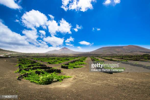 landscape of vineyards and volcanoes in lanzarote - lanzarote stock pictures, royalty-free photos & images