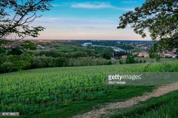 Landscape of vineyards in Nervesa della Battaglia-Treviso-Italy, land of Prosecco wine