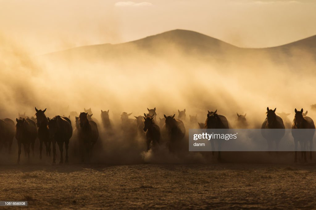 Landscape Of Wild Horses Running At Sunset With Dust In Background Foto De Stock Getty Images