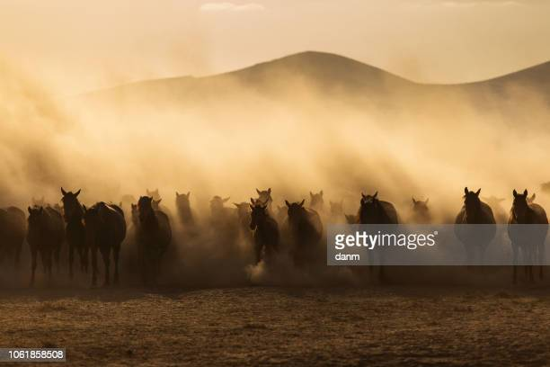 landscape of wild horses running at sunset with dust in background. - fauna silvestre - fotografias e filmes do acervo