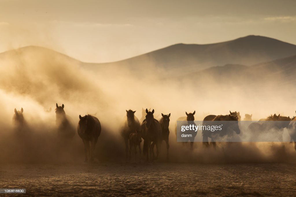 Landscape Of Wild Horses Running At Sunset With Dust In Background High Res Stock Photo Getty Images