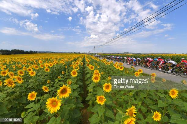 Landscape / Peloton / Sunflowers / during the 105th Tour de France 2018, Stage 16 a 218km stage from Carcassonne to Bagneres-de-Luchon on July 24,...