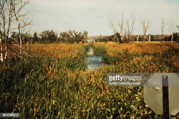Landscape photograph of a drainage ditch surrounded by wetland vegetation including cattails trees visible in the background and the reverse side of...