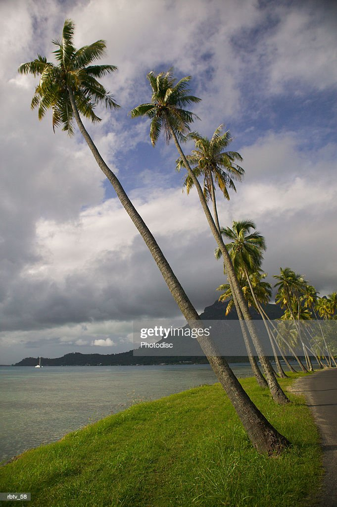 landscape photograph of a line of palm trees as that lean towards the beautiful beach : Foto de stock