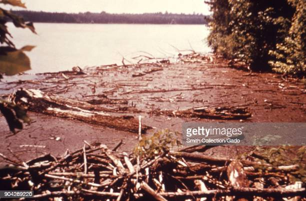 Landscape photograph of logs and debris at the edge of a lake reservoir with wooded shoreline visible in background taken as part of an investigation...