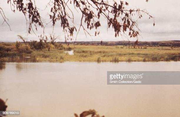 Landscape photograph of marshes at the edge of a lake reservoir with a tree branch visible in the foreground and distant hills in the background...