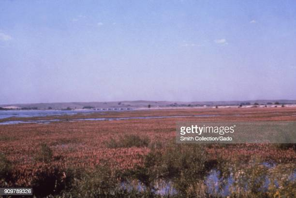 Landscape photograph of pink flowering vegetation at the marshy edge of a lake reservoir set in a flat grassy area taken as part of an investigation...