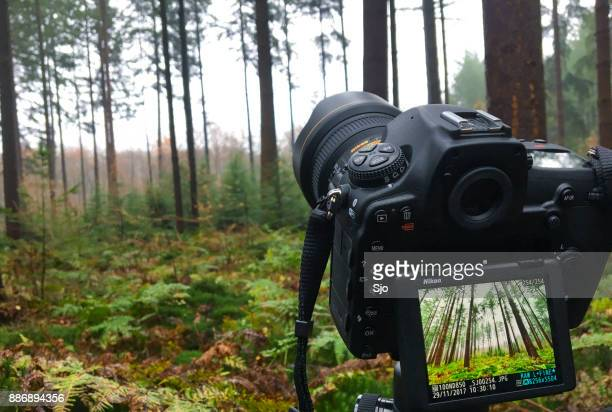landscape photography in a forest with the new  nikon d850 dslr - nikon stock pictures, royalty-free photos & images