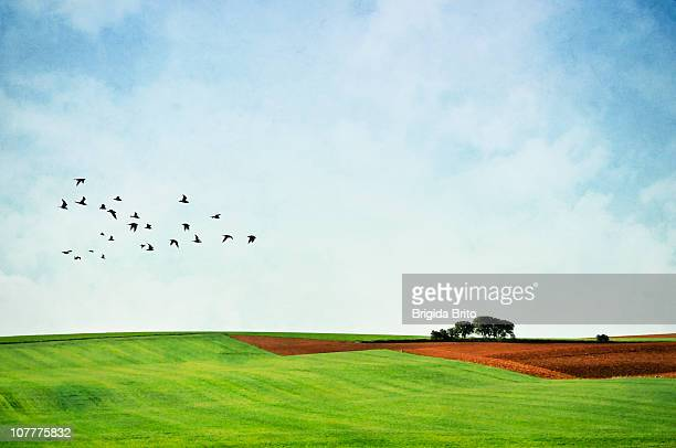 landscape - birds flying stock photos and pictures