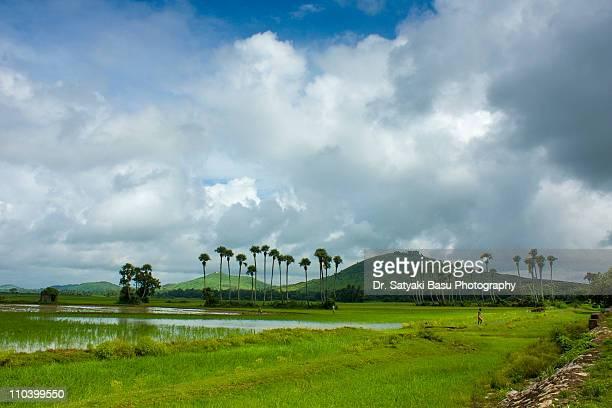 landscape - odisha - fotografias e filmes do acervo
