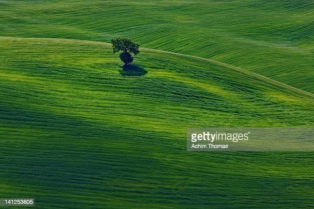 landscape - achim thomae stock-fotos und bilder
