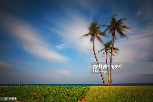 landscape - quảng ngãi bildbanksfoton och bilder