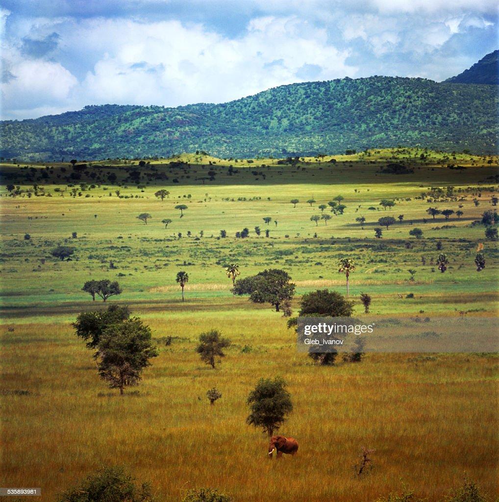 Landscape : Stock Photo