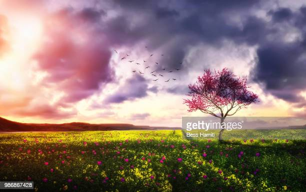 landscape - dawn bess stock pictures, royalty-free photos & images