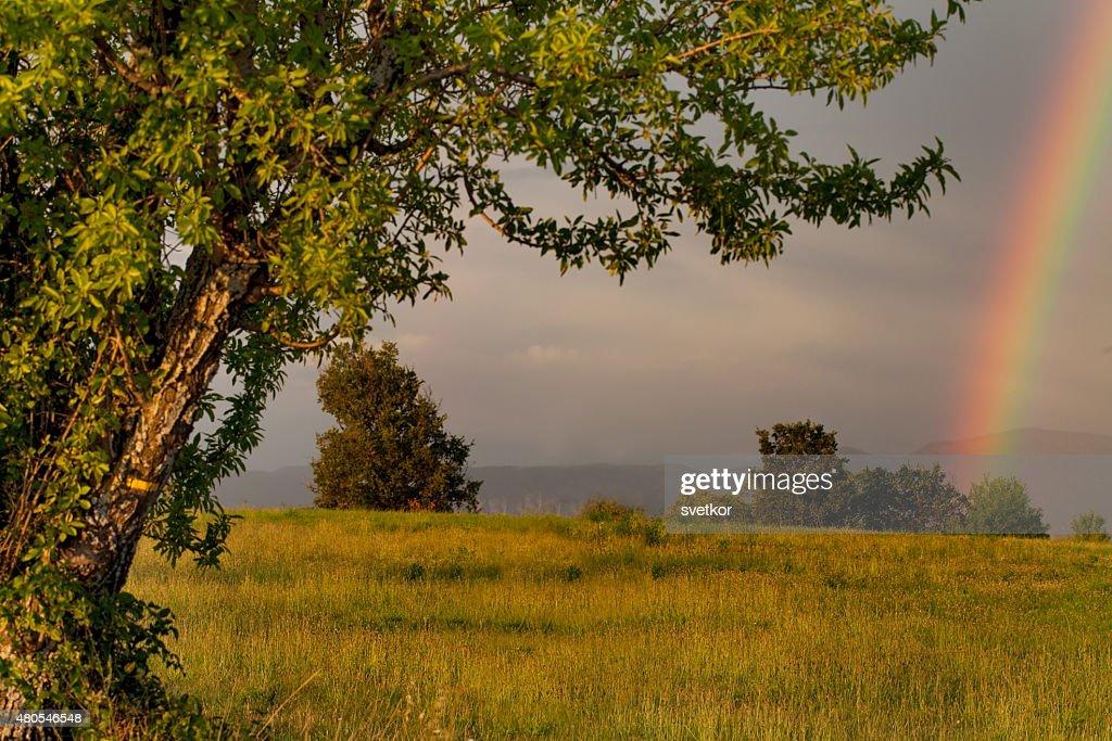 Landscape, rainbow, Provence, France : Stock Photo