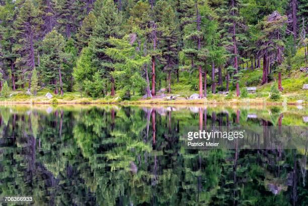 Landscape Reflections