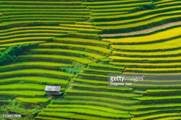 landscape rice fields on terraced of mu cang chai, yenbai, vietnam - patchwork stock pictures, royalty-free photos & images