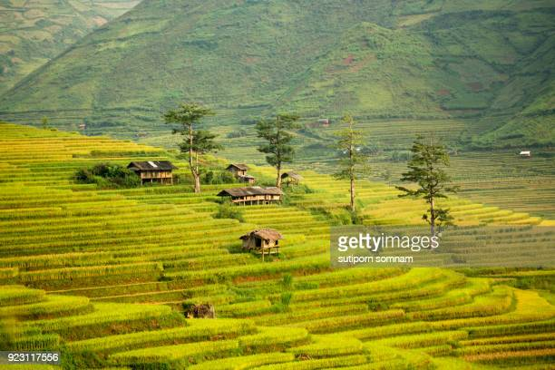 landscape rice filed terrace vietnam - myanmar culture stock photos and pictures