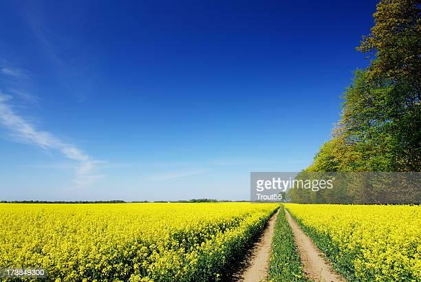 Landschaft und ländlichen Pfad zu Feldern