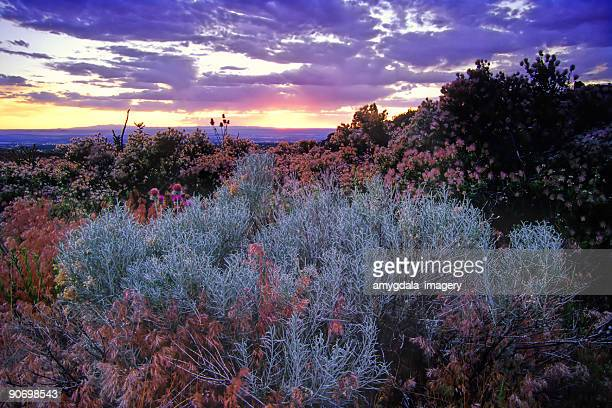 landscape sagebrush sunset sky desert - new mexico stock pictures, royalty-free photos & images