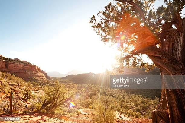Landscape scene of red rock mountains and desert with sunlight