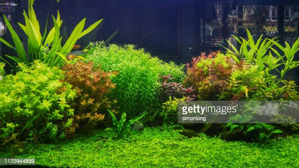 landscape scenery in the fish tank - aquatic organism stock pictures, royalty-free photos & images