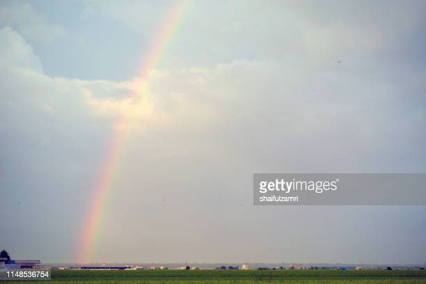 landscape scenery of green paddy field with rainbow in sekinchan, malaysia. - shaifulzamri foto e immagini stock