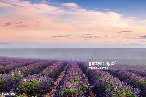 landscape: scenic lavender field in provence, france - côte d'azur photos et images de collection