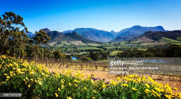 Landscape Scenic of Vineyards of Franschhoek, South Africa