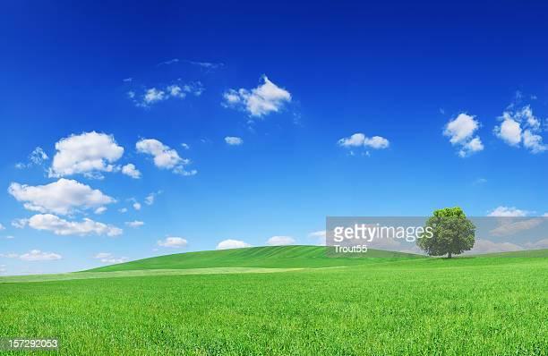 Landscape - see description