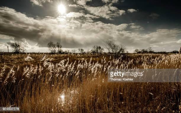 Landscape shot at Glowe on the island Ruegen with grasses on February 05 2018 in Glowe Germany