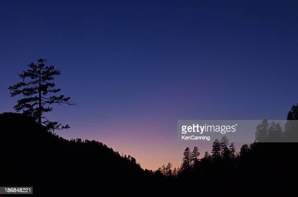 夕暮れの木