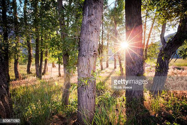 landscape sunrise with sunburst through trees in colorado - robb reece stock pictures, royalty-free photos & images