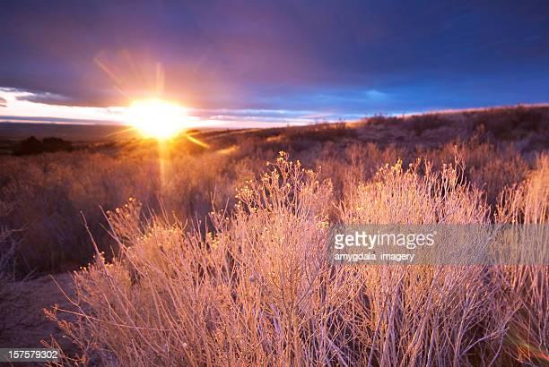 landscape sunset desert sagebrush sunlight - sandia mountains stock photos and pictures