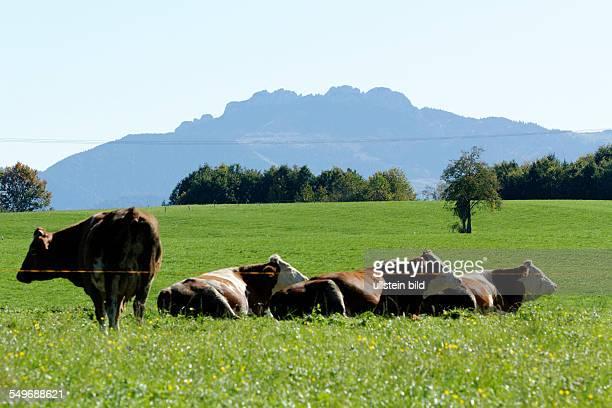Landscape to the Kampenwand mountain Chiemgau Upper Bavaria Germany