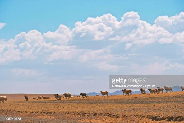 landscape view at gobi desert nationalpark at mongolia. - nationalpark stock pictures, royalty-free photos & images