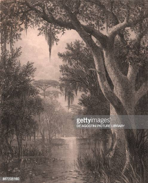Landscape view near Bayou Lafourche Louisiana United States steel engraving by William Wellstood after a painting by Joseph Rusling Meeker ca 19x14...