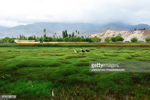 landscape view near shey palace - kashmir valley stock photos and pictures