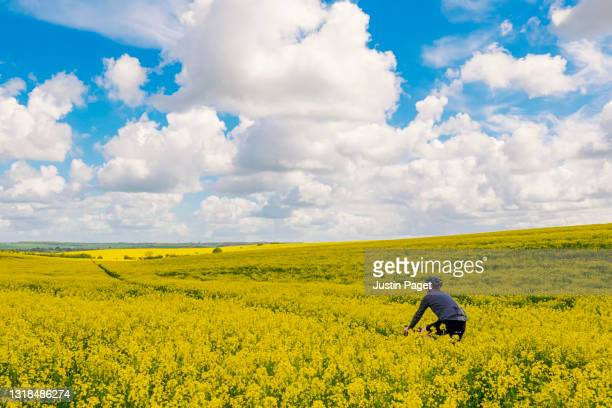 landscape view of a man cycling in the springtime countryside - crucifers stock pictures, royalty-free photos & images