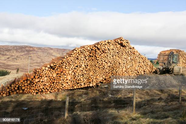 A  landscape view of a pile of pine logs in Perthshire, Scotland, UK.